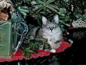 Kate's cat